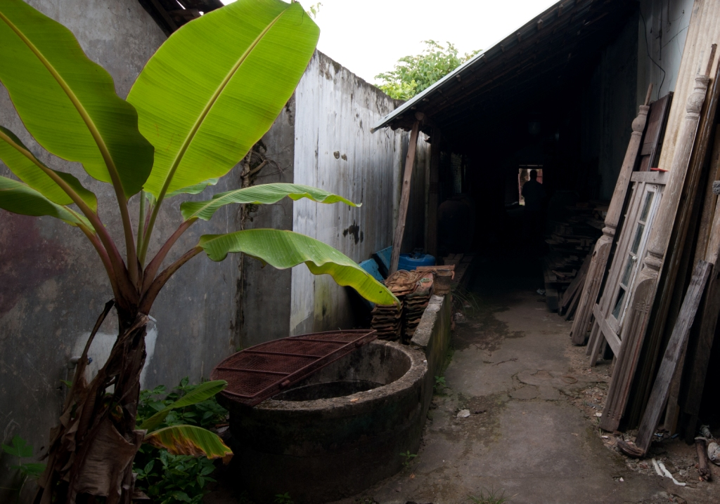 Plantain by the well