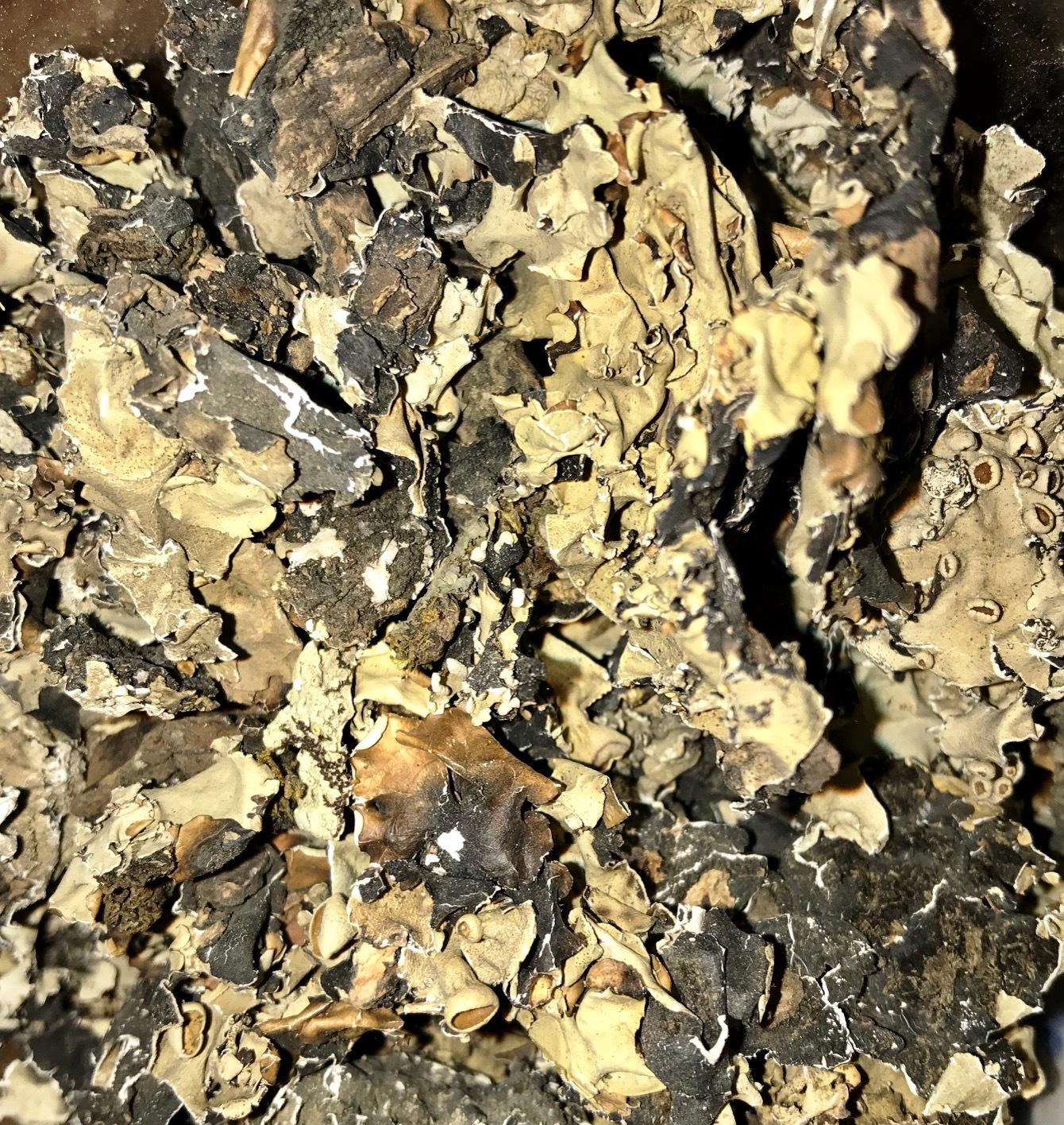 Black Stone Flower – MyRefractions Black Stone Flower
